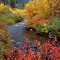 Palisades Creek Canyon Autumn by Leland D Howard