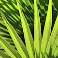 Palm Portrait II by Leda Robertson