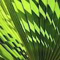 Palm Portrait Iv by Leda Robertson