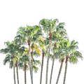 Palm Tree Grove by Ramona Murdock