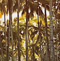 Palm Trees In Kahana Valley  by Thomas R Fletcher