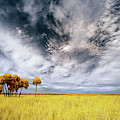 Palm Trees In Myakka Park by Jon Glaser