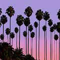 Palm Trees, Palm Haven, San Jose, California by David Arrigoni