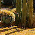 Palo Brea Blossoms And Cactus Garden by Colleen Cornelius