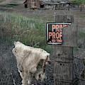 Palouse Barn 9916 by Bob Neiman