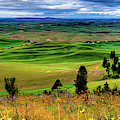 Palouse Hills From The Butte by David Patterson