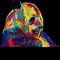 Panda Little Bear Australia Animal Color Designed by Super Katillz
