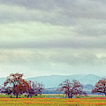 Panorama Of Lone Oaks Standing In A Prairie - Uvalde County Utopia Texas Hill Country by Silvio Ligutti