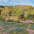 Panorama Of Willow City Loop Bluebonnets And Granite Mountains - Fredericksburg Texas Hill Country by Silvio Ligutti
