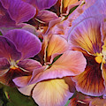 Pansy Field In Violet And Yellow 6 by Lynda Lehmann