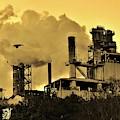 Paper Mill by Cynthia Guinn