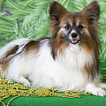 Papillon On Green by Donna Anderson
