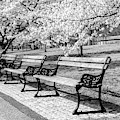 Park Benches by Anthony Sacco