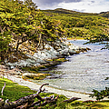 Parque National Tierra Del Fuego, Argentina by Lyl Dil Creations