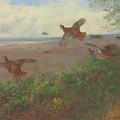 Partridges In Flight, 1907 by Archibald Thorburn