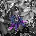 Passion Flower Only by Dennis Dempsie