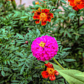 Pastel Wild Flowers by John Straton