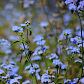 Patch Of Blue by Perry Correll