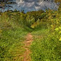 Path In Greenary #i0 by Leif Sohlman