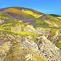 Pathway To Heaven - Carrizo Plain Superbloom Panorama 2017 by Lynn Bauer