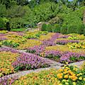 Patterned Quilt Garden by Jill Lang