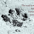 Paw Prints by Patti Whitten