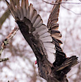 Peace Eagle Taking Off In The Rain by Terry DeLuco