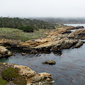 Peaceful Point Lobos by Marie Leslie