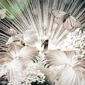 Peacock In Dreams by Debra and Dave Vanderlaan
