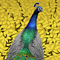 Peacock In Tree, Naples Yellow, Square by David Arrigoni