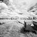 Pee Dee Tobacco Field B-w by Charles Hite