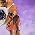 Peek A Boo Beagle by Patti Schermerhorn