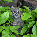 Peeking Out by Dan Friend