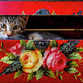 Peeking Out Of A Red Box by Garry Gay