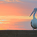 Pelican At Sunrise by Yury Prokopenko