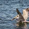 Pelican Landing by Framing Places