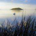 Pelican On Klamath Lake by Christopher Johnson