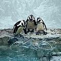 Penguins by Fotografias De Rodolfo Velasco