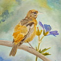 Pensive Baltimore Oriole by Angeles M Pomata