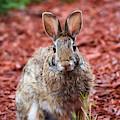 Peter Rabbit One by Patti Whitten