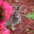 Peter Rabbit Three by Patti Whitten
