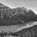 Peyto Lake Red Tip Reflections Black And White by Adam Jewell