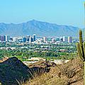 Phoenix Skyline Framed By Saguaro by Dszc