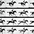Photographer Eadweard Muybridges Study by Eadweard Muybridge