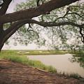 Pierce Marsh by Ray Devlin
