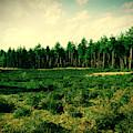 Pijnven Green by Jurgen Huibers