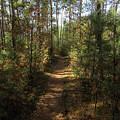 Pijnven Path by Jurgen Huibers