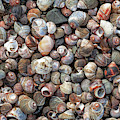 Pile Of Seashells by Todd Klassy