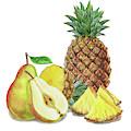 Pineapple Pear Watercolor Food Illustration  by Irina Sztukowski