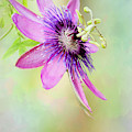 Pink And Purple Passion by Sabrina L Ryan